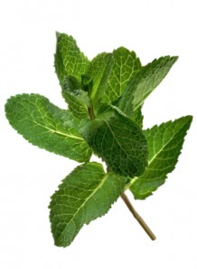 spearmint oil (India)