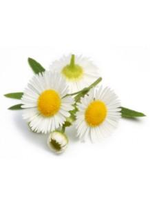 chamomile oil (roman)