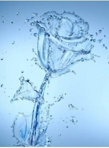 Flora Solve™ (ผสมน้ำหอมในน้ำ)