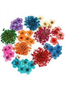 Powderly Blossoms