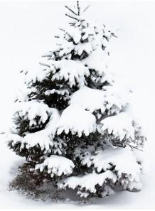 Cool Pine