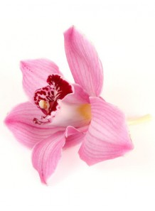 Bescents O (orchid - กล้วยไม้)