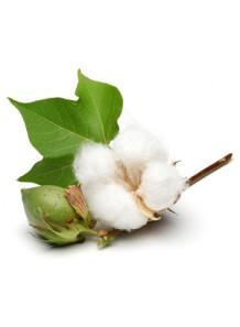 Cotton Blossom (Bath & Body Works)