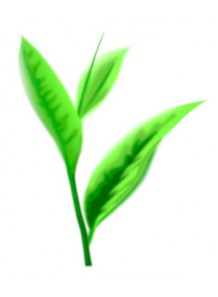 Green Tea (Elizabeth A.)