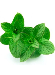 Bergamot Mint Oil (Mentha Citrata)