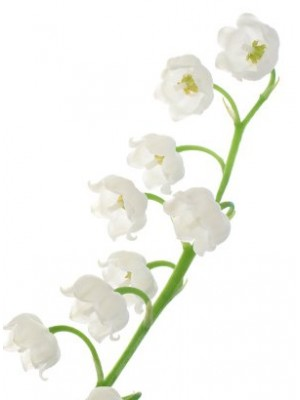 Bescents M (lily Of The Valley)