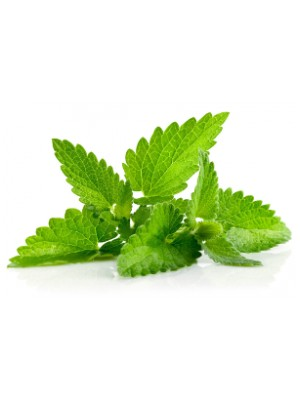 Corn Mint Oil (Leaf)
